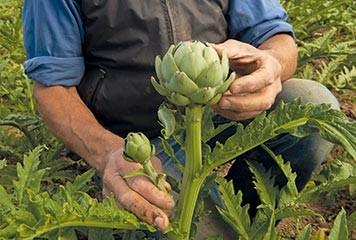 Le Département maintient ses aides à l'agriculture en 2016